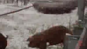 [영상] 호남고속도로서 돼...