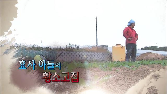 효자 아들의 황..