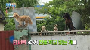 골목을 점령한 개들과 수상한 여자