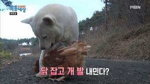 닭들을 지키는 특별한 양계장 열혈직원!