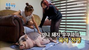 미니 돼지 후쿠와의 육아 전쟁