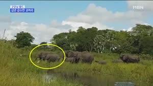 [굿모닝월드2]십년 감수한 코끼리