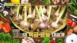[약(藥)이 되는 장수 밥상! '마늘'