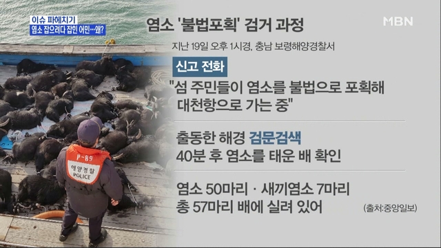 MBN 뉴스파이터-보령해경, 야생염소 50여 마리 포획해 입항하는 선박 검거