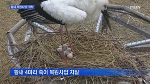 [충남] 황새 자연부화 잇따라 성공…복원 사업 '착착'