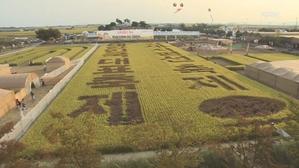 [전북] 호남평야 '지평선 축제'…황금 들녘서 농경 체험