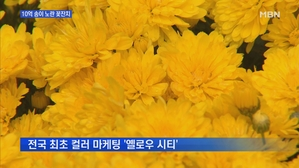 [전남] 황룡강변 3.5km 물들인 10억 송이 '노란 꽃'