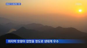 [전남] 최대 상사화 군락지 '영광 불갑산' 도립공원 지정