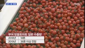[충남] 새콤달콤 '부여 방울토마토'…일본 수출 '활활'