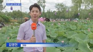 [충남] 천만 송이 연꽃의 향연…주말에는 축제도 열려