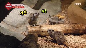 세계의 동물과 교감하는 곳, 실내 동물 테마파크!