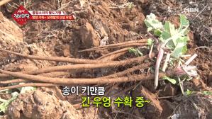 영양 가득~ 모래밭의 산삼 우엉