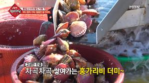 겨울 바다에 핀 단풍의 정체는?