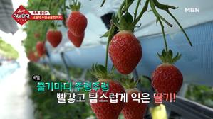 피아노 선생님이 딸기 농부가 된 사연