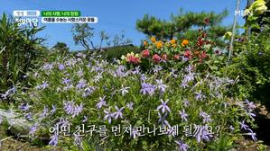 사랑스러운 여름 꽃이 가득한 뜨락